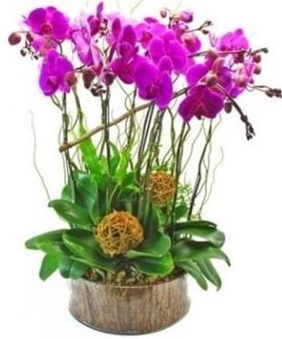 Ahşap kütükte lila mor orkide 8 li  Sakarya güvenli kaliteli hızlı çiçek