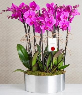 11 dallı mor orkide metal vazoda  Sakarya cicek , cicekci