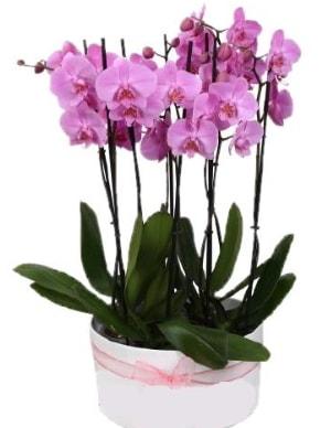 Beyaz seramik içerisinde 7 dallı mor orkide  Sakarya 14 şubat sevgililer günü çiçek
