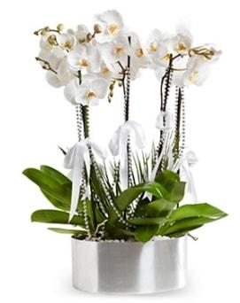 Beş dallı metal saksıda beyaz orkide  Sakarya cicekciler , cicek siparisi
