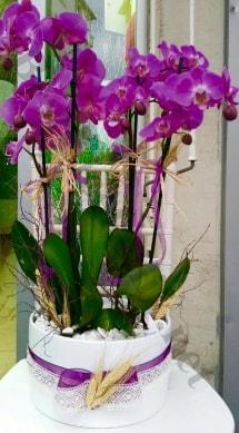 Seramik vazoda 4 dallı mor lila orkide  Sakarya İnternetten çiçek siparişi