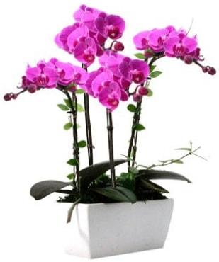 Seramik vazo içerisinde 4 dallı mor orkide  Sakarya anneler günü çiçek yolla