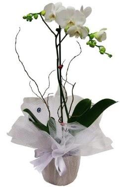 Tek dallı beyaz orkide  Sakarya çiçek gönderme sitemiz güvenlidir