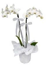 2 dallı beyaz orkide  Sakarya internetten çiçek satışı