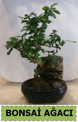 Bonsai ağacı japon ağacı satışı  Sakarya çiçek servisi , çiçekçi adresleri