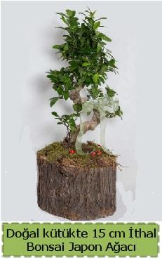 Doğal kütükte İthal bonsai japon ağacı  Sakarya uluslararası çiçek gönderme