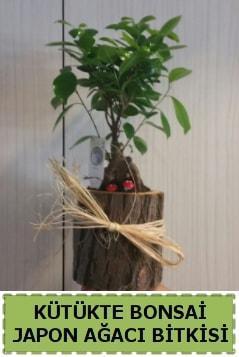 Kütük içerisinde doğal bonsai ağacı  Sakarya 14 şubat sevgililer günü çiçek