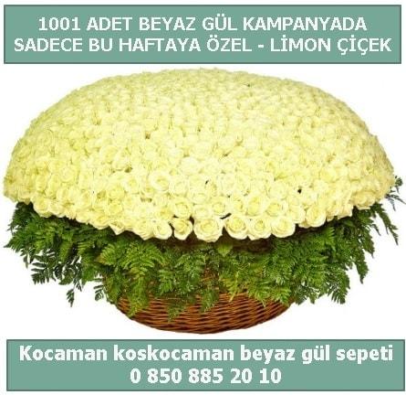 1001 adet beyaz gül sepeti özel kampanyada  Sakarya cicek , cicekci
