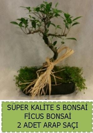 Ficus S Bonsai ve arap saçı  Sakarya 14 şubat sevgililer günü çiçek