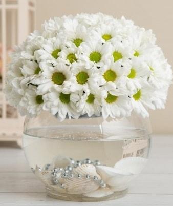 Fanusta beyaz Papatya  Sakarya anneler günü çiçek yolla