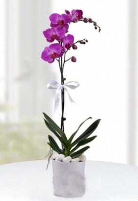 Tek dallı saksıda mor orkide çiçeği  Sakarya yurtiçi ve yurtdışı çiçek siparişi