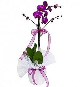 Tek dallı saksıda ithal mor orkide çiçeği  Sakarya yurtiçi ve yurtdışı çiçek siparişi