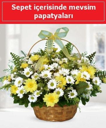 Sepet içerisinde mevsim papatyaları  Sakarya çiçek online çiçek siparişi