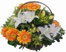 Sakarya internetten çiçek siparişi  sepet modeli Gerbera kazablanka sepet